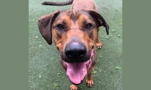 Pet of the Week: Cora