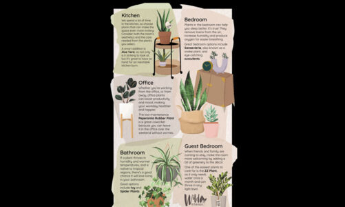 How and where to add indoor plants